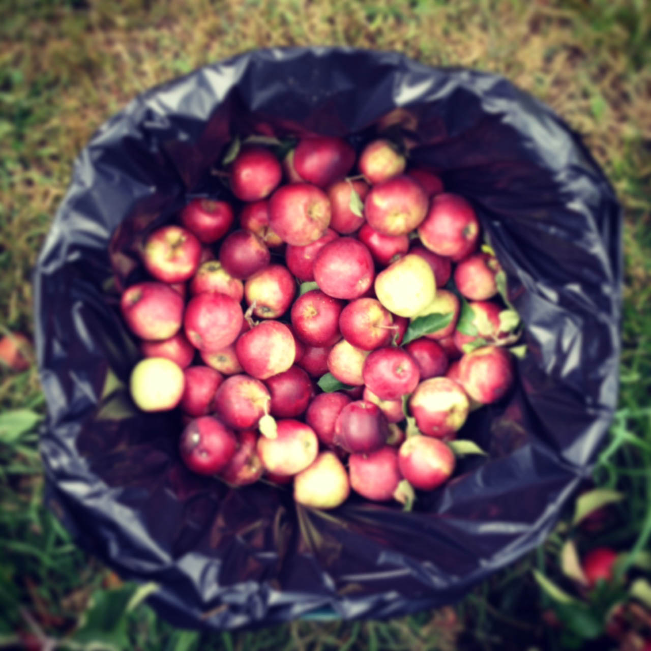Collecting apples after 10 minutes